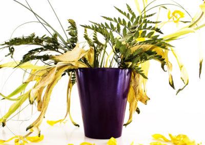 Fotografía botánica