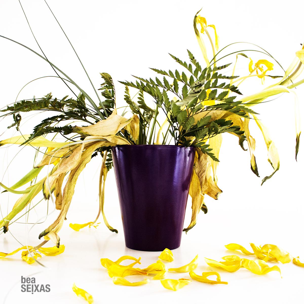 Fotografía de planta con luz natural realizada por Bea López Seijas, fotógrafa gallega en Barcelona.